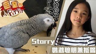 【巨星Pet Pet】Starry鸚鵡聰明兼抵錫