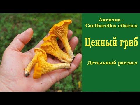 Гельминты в овощах