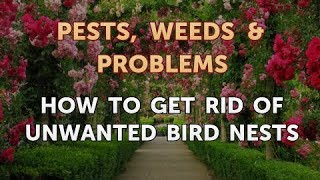 How to Get Rid of Unwanted Bird Nests