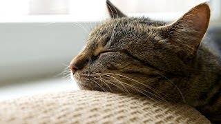 How to Help a Cat Adjust to a New Home | Cat Care