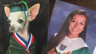 Daughter Swaps Out Family Pics For Photos Of Chihuahua In Matching Costumes