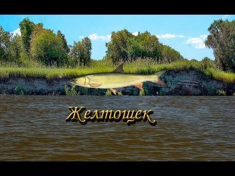 Русская Рыбалка 3.9 Желтощек