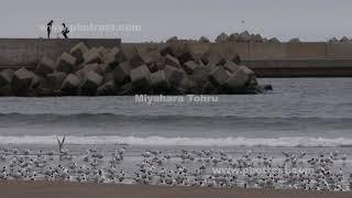 斜里港の動画素材, 4K写真素材