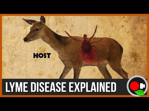 Video The Biology and Ecology of Lyme Disease - Untamed Science