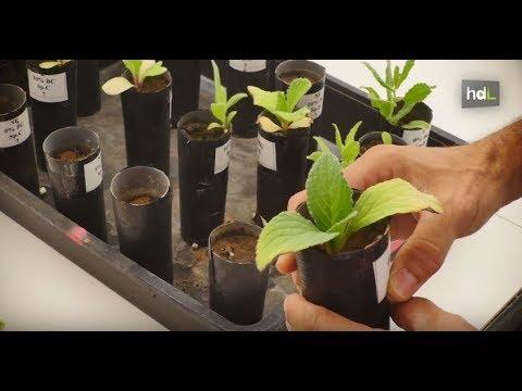 Matemáticas y biología para predecir el futuro de las plantas