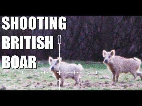 Fieldsports Britain – White wild boar and university clay championships