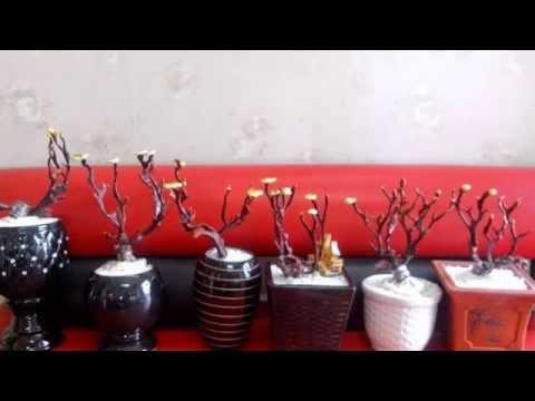 Nấm linh chi Bonsai - Nguyễn Doãn Tùng - Nupshop 298 Thụy Khuê