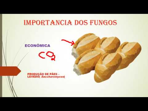 O fungo entre dedos do pé como tratar remédios de gente