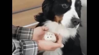 Собаке впаривают мышь