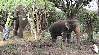 An elephant with a bullet wound gets preliminary aid from wildlife officers