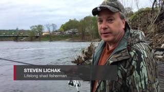 Shad fishing in the Delaware River at Easton April 19, 2017