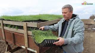 Технология выращивания лука через рассаду - высадка в открытый грунт