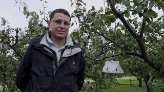 Coltivazioni Frutticole, buone prassi e innovazioni in agricoltura
