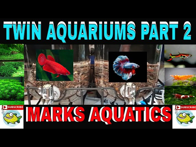 A better Aquarium for Betta!!!