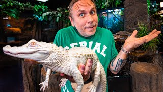 MORE ALBINO ALLIGATOR ISSUES TO TRY TO FIX!!!   BRIAN BARCZYK