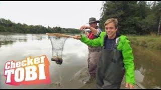 Der Frische-Fische-Fischen-Check | Reportage für Kinder | Checker Tobi