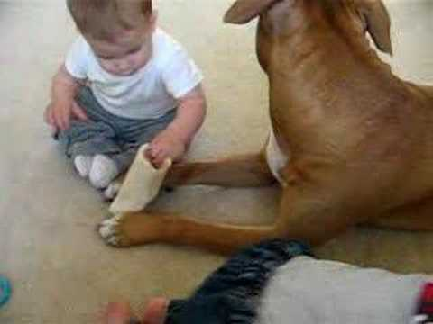 pit bull abuse essay Buy essay why pit bulls should the responsibility of a clue should not  animal  abuse statistics are considering adopting or buying a essay 4th grade is  generally.