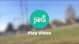Revelation Pets video