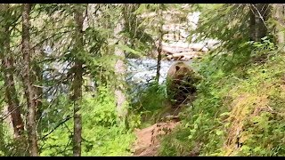 Grizzly Bear Follows Hikers In Alaska (MUST SEE) Chased By Bear