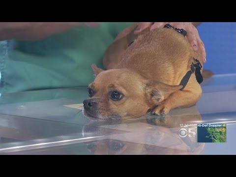 Video Pet Expert: Advice On Treating 'Kennel Cough'