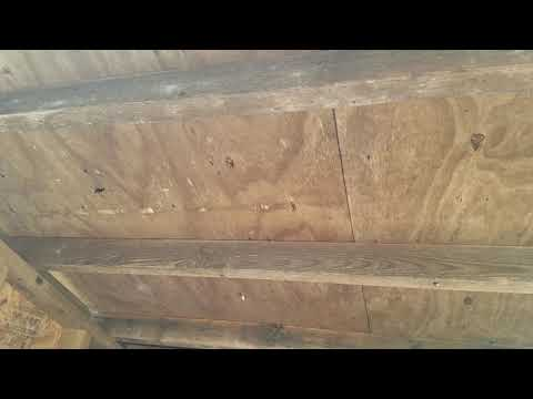 Wooden Storage Shed Infested with Carpenter Bees in Rumson, NJ