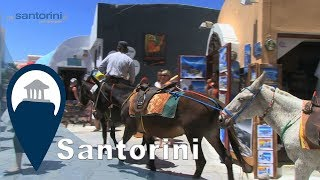 Santorini | A Ride With A Donkey