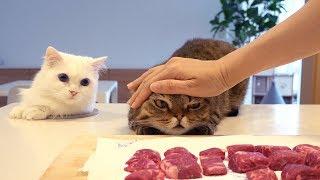 Ada Lubang Rahasia Untuk Kucing Di Dapur Rumah! (INDO SUB)