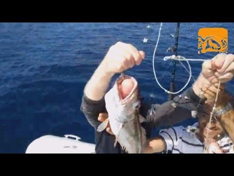 Il capriccio per pescare in Samara