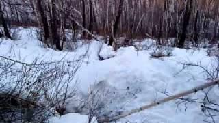 Смотреть онлайн Зимняя охота с собаками на медведя в берлоге