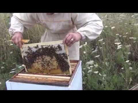 Отводки пчел  Как сделать отводок пчел  Slips bees  How to make a nucleus of bees