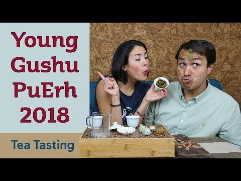NEW Young Gushu Pu Erh Tea 2018 - TEA TASTING