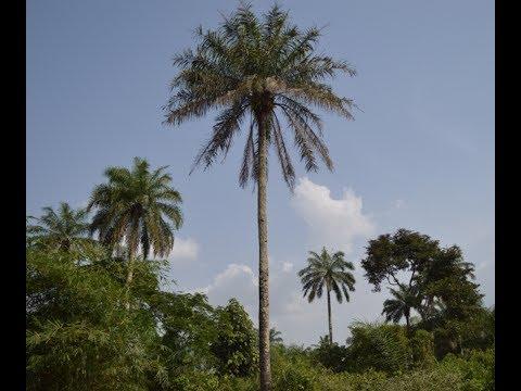 Osu System in Igboland Explained