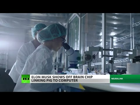 SMH: Elon Musk Out Here Putting Brain Chips In Pigs