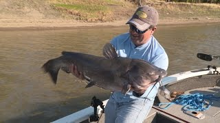 Trophy Red River Catfish