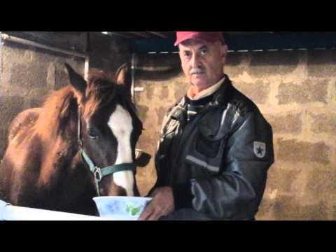 Attivatore di cavallo di risposte