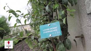 preview picture of video 'Les saveurs du Potager du Roi, Versailles'