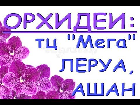 """ЛЕРУА,Ашан:ОРХИДЕИ в ТЦ """"Мега"""",Самара,23.02.21."""