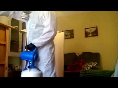 Hogyan terjed a bika szalagféreg