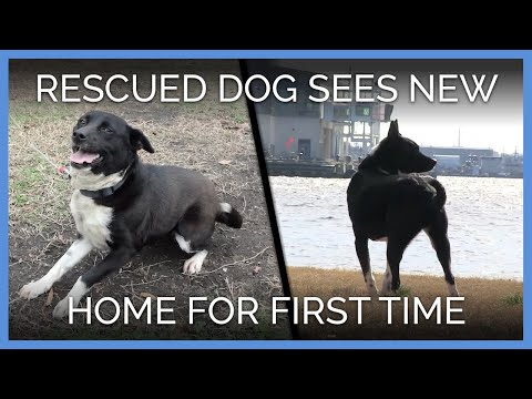 Rescued Dog Sees New Home For The First Time | PETA Animal Rescues