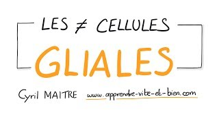 Vignette de NEUROSCIENCES EN DESSINS : Les différents types de cellules gliales