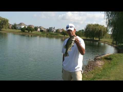 Bass Fishing in Ponds – Using Creek Chubs as Bait