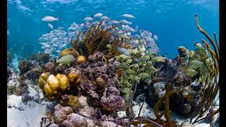 Belize's barrier reef is removed from UNESCO's List of World Heritage in Danger