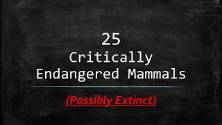 25 Critically Endangered Mammals