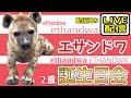 ハイエナ「エサンドワ」誕生日会 ライブ配信終了【千葉市動物公園公式】