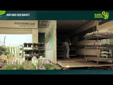 YOUTUBE | Star&Star Blumengroßhandel Köln Düsseldorf Dortmund Rosen Tulpen