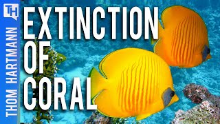 Will Climate Change Cause Coral Reefs To Go Extinct (W/ Steven Trent)