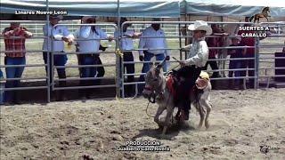 Gallo Enterrado Suertes a Caballo Linares N.L.