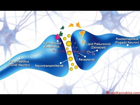 Hogyan lehet felfedezni az emberben a papilloma vírust