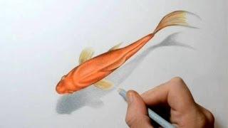 Смотреть онлайн Как нарисовать золотую рыбку
