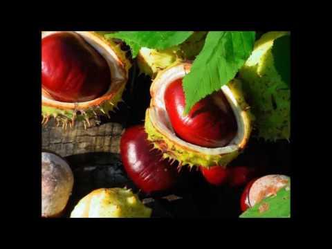 Semintele de in pentru diabet